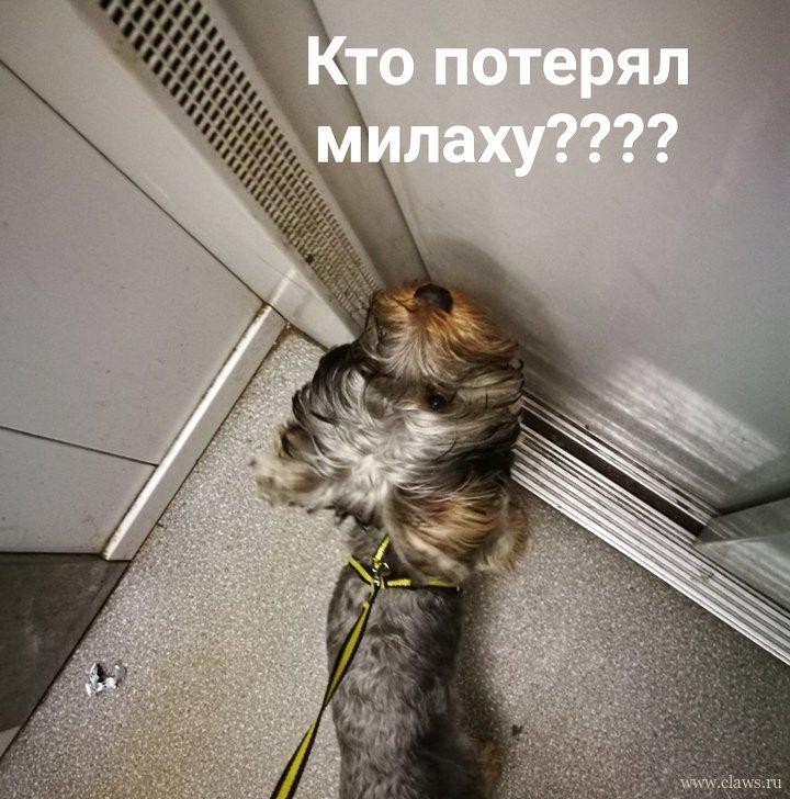 Фото не найдено
