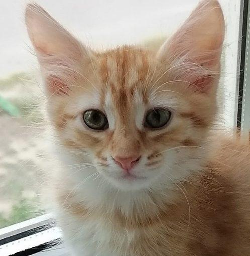 Обычный котёнок