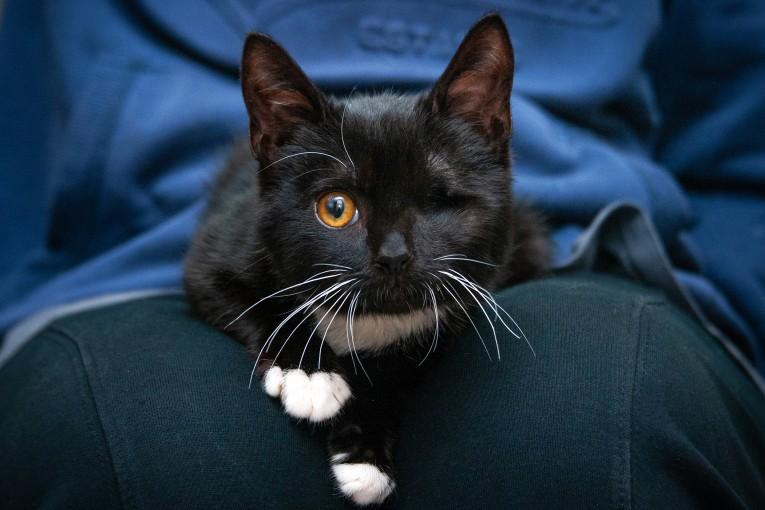 Котенок Стиви с особенной судьбой ищет свою идеальную семью!