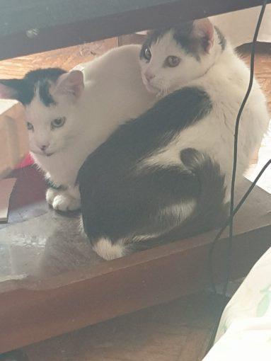 Две сестрички ищут дом!