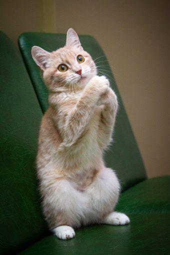 Нежный цветочный лучик, котенок Забава ищет свою идеальную семью!..