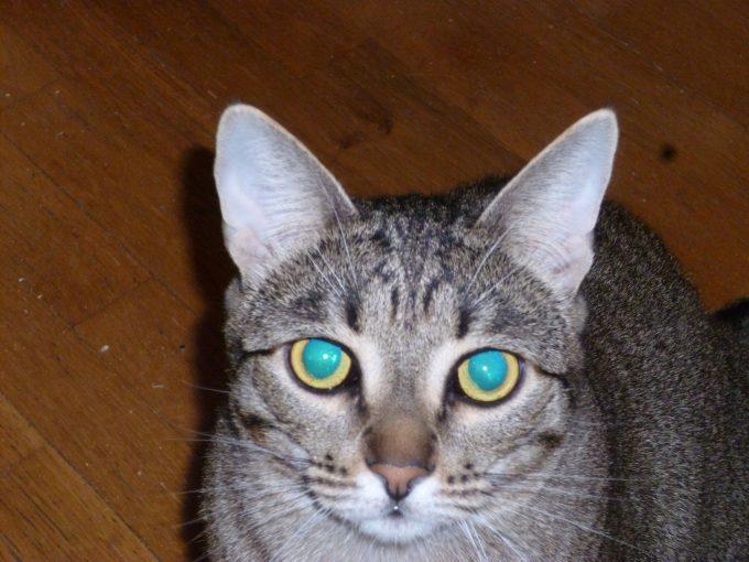 Беспородный кот 1