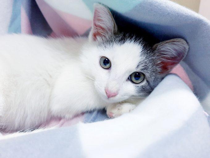 Маленький мяу, котенок Бананго ищет свою идеальную семью!