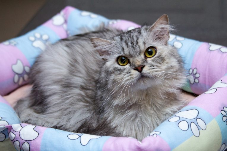 Годовалый котенок ПЕРЧИК ищет свою идеальную семью!