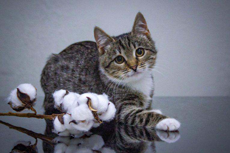 Сладкая булочка, котенка БУКЛЯ ищет свою ответственно любящую, идеальную семью!